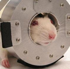 Ratcap 1