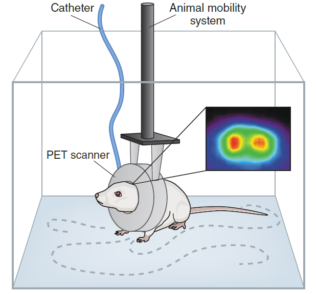 The RatCAP mechanical system enables the awake animal to move freely about a cage or skinner box while the brain is being imaged.  sc 1 st  Synchropet & RatCap - Synchropet Aboutintivar.Com